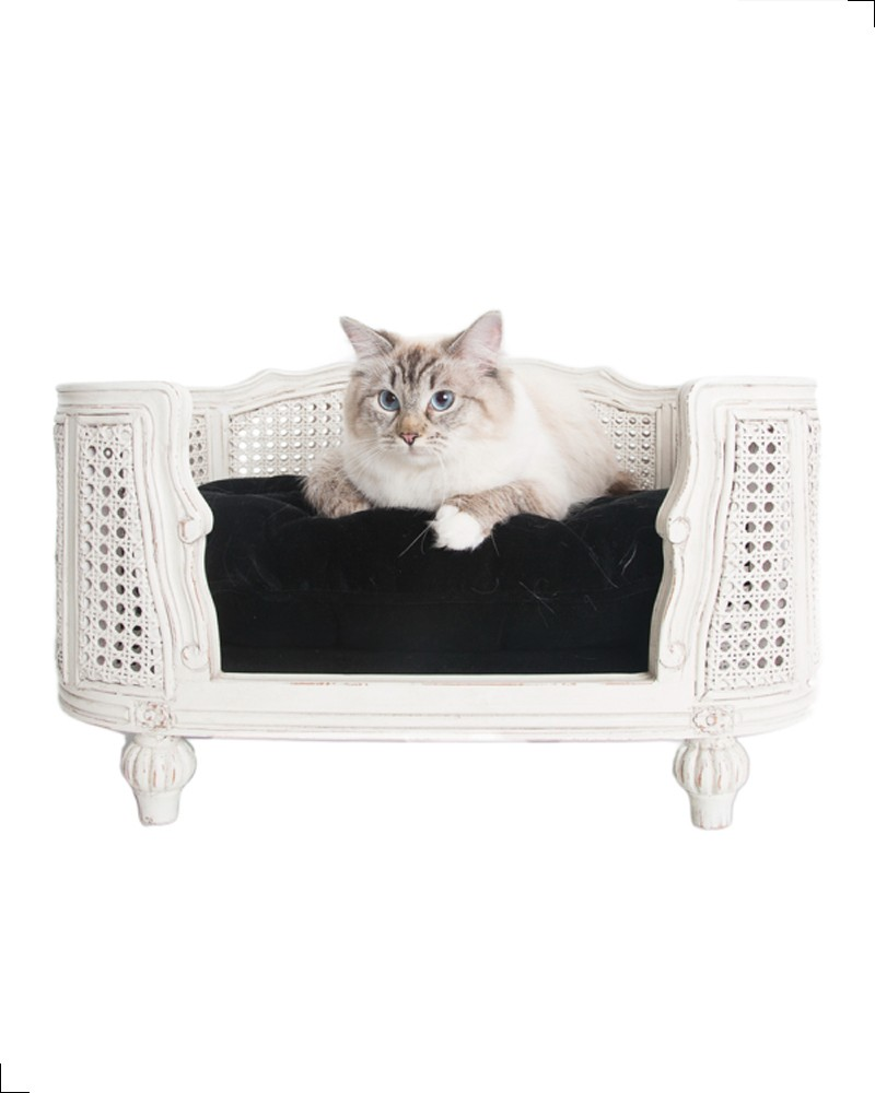 canap de luxe pour chat style louis xv lord lou. Black Bedroom Furniture Sets. Home Design Ideas