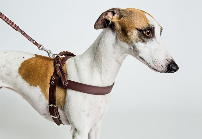 Cloud 7 - Colliers de luxe pour chiens
