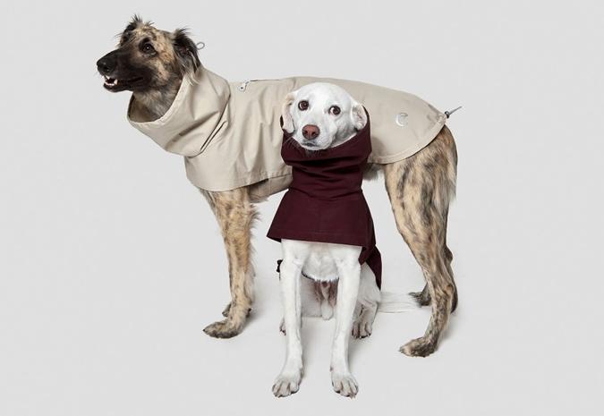Cloud 7 laisse de luxe pour chien